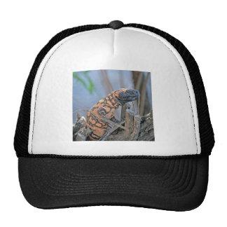 Gila-Krustenechse Kult Cap