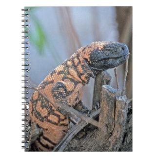 Gila-Krustenechse Spiral Notizbücher