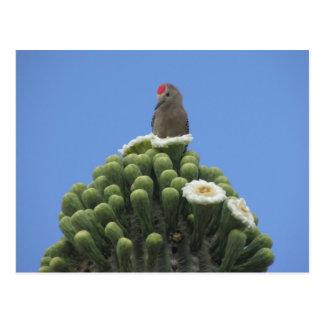 Gila-Specht auf Saguaro-Blüte Postkarte