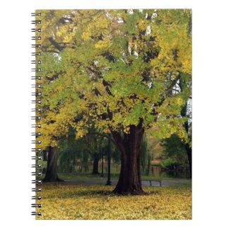Ginkgo-Baum im Fall Notizblock