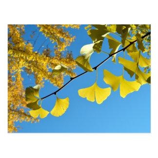 Ginkgo-Blätter im Herbst Postkarte