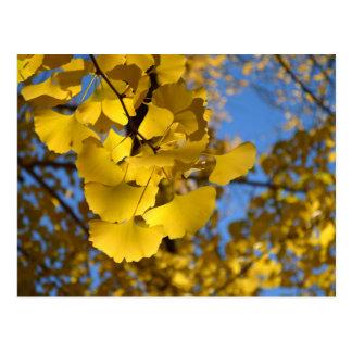 Ginkgo-Blätter Postkarte