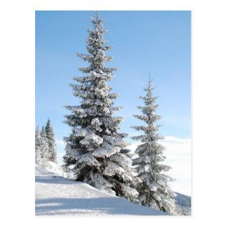 Gipfelbäume Postkarte