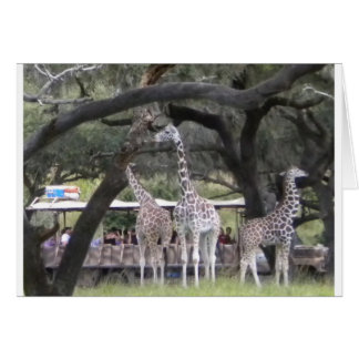 Giraffe 3 an der Safari Karte