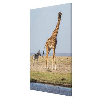 Giraffe durch ein Waterhole Leinwanddruck