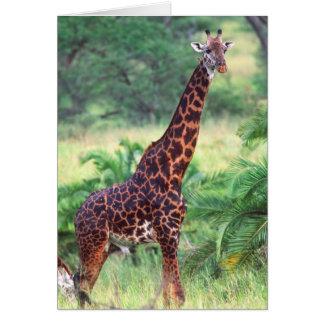 Giraffe, Giraffa camelopardalis, Tansania Afrika 2 Karte