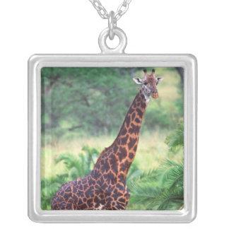 Giraffe, Giraffa camelopardalis, Tansania Afrika 2 Versilberte Kette