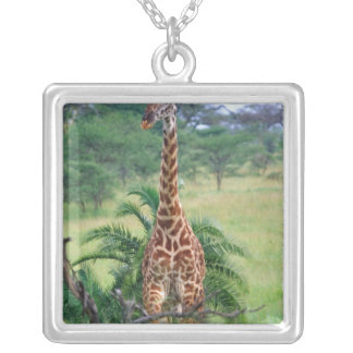 Giraffe, Giraffa camelopardalis, Tansania Afrika Versilberte Kette