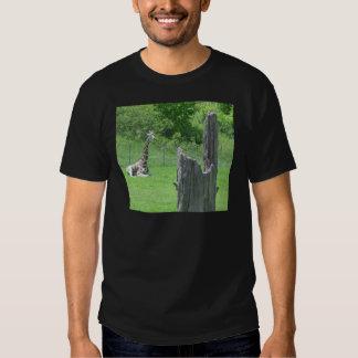 Giraffe hinter einem defekten Baum-Stumpf während Hemd