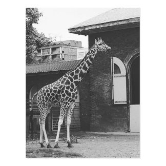 Giraffe in der London-Vorlagenpostkarte Postkarte