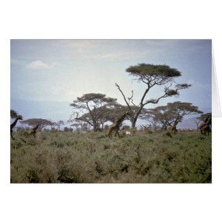 Giraffe, Kenia Karte