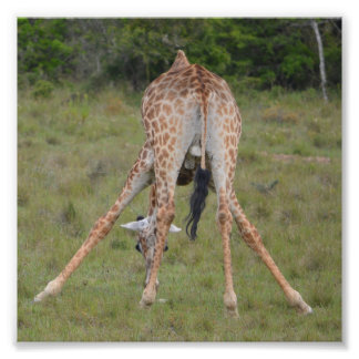 Giraffe Kunst Photo