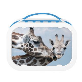 Giraffe küsst ihr Kalb Brotdose