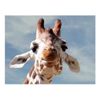 Giraffe nah mit blauem Himmel Postkarte