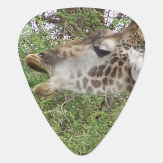 Giraffe Plektrum