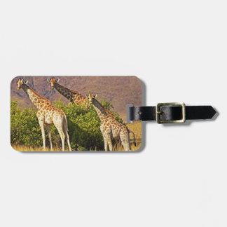 Giraffen 1B-Gepäckanhänger Gepäckanhänger