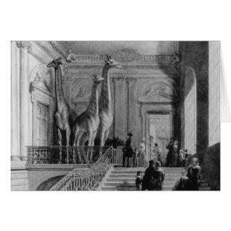 Giraffen auf dem Treppenhaus in den Briten Karte