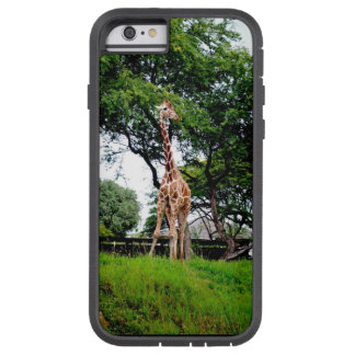 Giraffen-Fall Tough Xtreme iPhone 6 Hülle