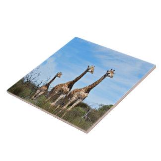 Giraffen-Familie auf grasartigem Gipfel Fliese