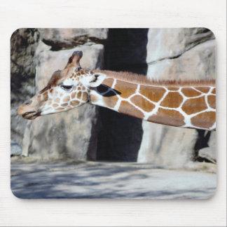 Giraffen-Foto Mauspads