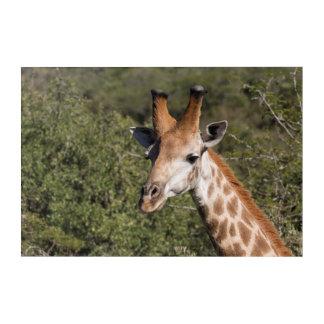Giraffen-Hauptdetail Acryl Wandkunst