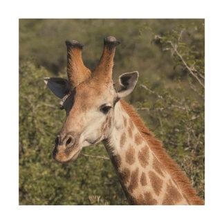 Giraffen-Hauptdetail Holzwanddeko