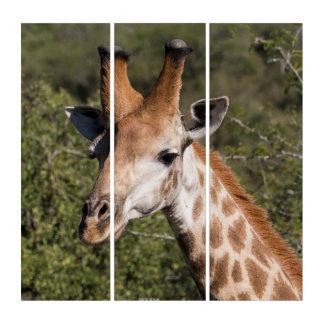 Giraffen-Hauptdetail Triptychon