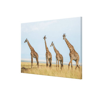 Giraffen-Herde in der Wiese Leinwanddruck