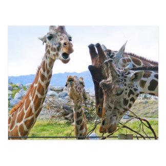 Giraffen-Klatsch-Postkarte Postkarte