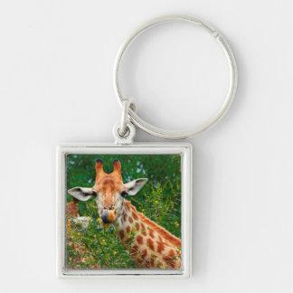 Giraffen-Porträt, Kruger Nationalpark Silberfarbener Quadratischer Schlüsselanhänger