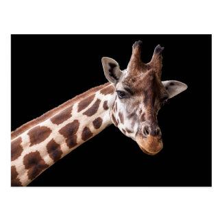 Giraffen-Porträt - Postkarte