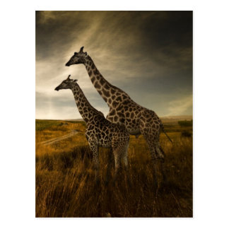 Giraffen und die Landschaft Postkarte