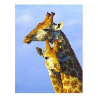 Giraffen unter blauem Himmel Postkarte