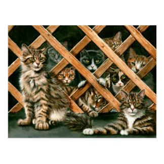 Gitter-Katzen-Postkarte Postkarte