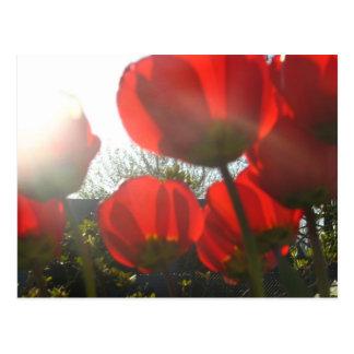 Glänzen auf Rot Postkarte