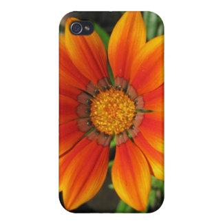 Glänzende frische Sonnenblume Hülle Fürs iPhone 4