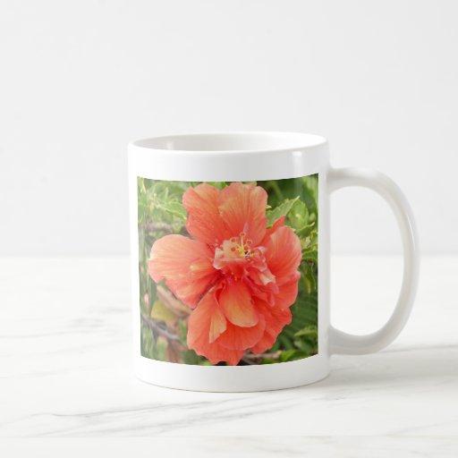 Glänzender orange Hibiskus Haferl