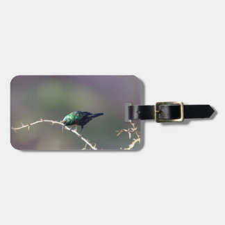 Glänzendes Sunbird (Cinnyris habessinicus) Kofferanhänger
