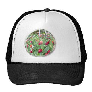 Glasbereich, der rote Tulpe-Blume reflektiert Mütze