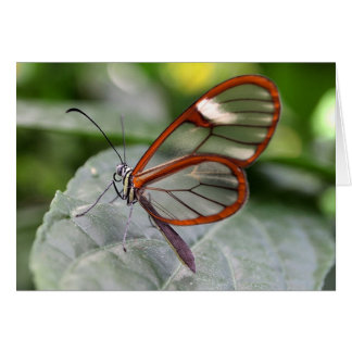 Glasswing Schmetterling notecard Karte