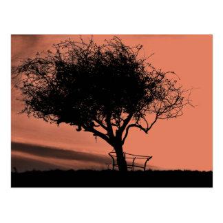 Glastonbury Weißdorn. Baum auf Hügel. Orange Postkarte