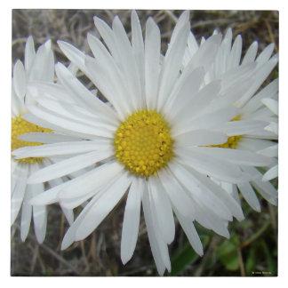Glatte Aster der weißen Wildblumen-F0042 Fliese