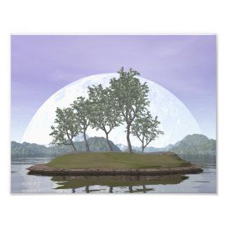 Glatter leaved Ulmenbonsaisbaum - 3D übertragen Fotodruck
