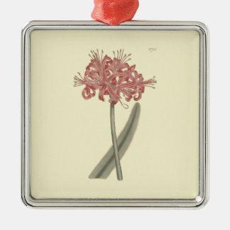 Glaucous Leaved Amaryllis-botanische Illustration Silbernes Ornament