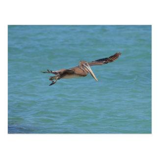 Gleitener Pelikan Postkarte