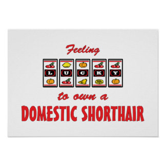 Glücklich zu eigenem ein inländischer Shorthair Sp Plakatdruck