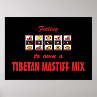 Glücklich zu eigenem ein tibetanischer Mastiff-Mis Plakate