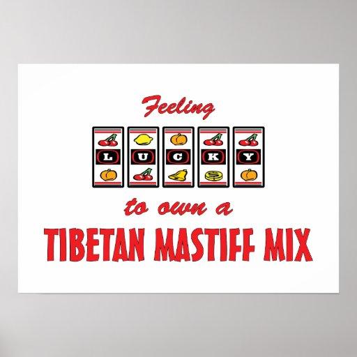 Glücklich zu eigenem ein tibetanischer Mastiff-Mis Posterdrucke