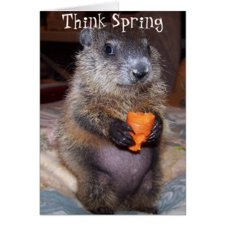 Glückliche Groundhog Day-Karte mit Baby Maude Karte