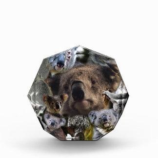 Glückliche Koala Auszeichnung